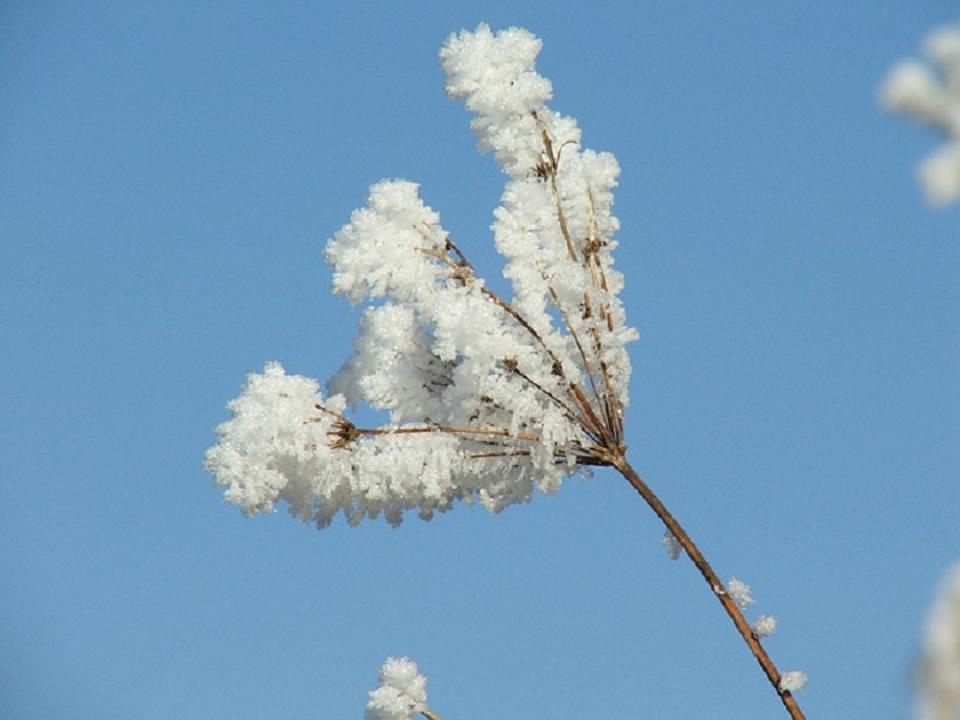 Január: Rastie deň, rastie i zima