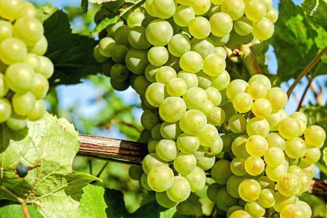 Vinič a jeho susedia
