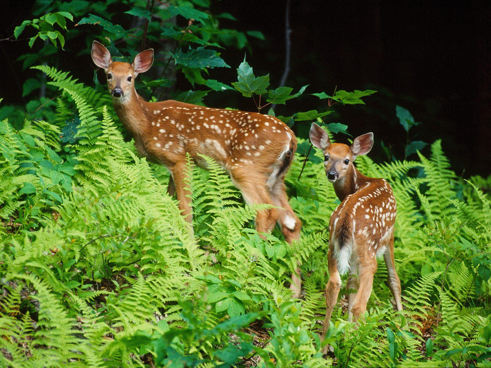 Zvieratá spoza plota