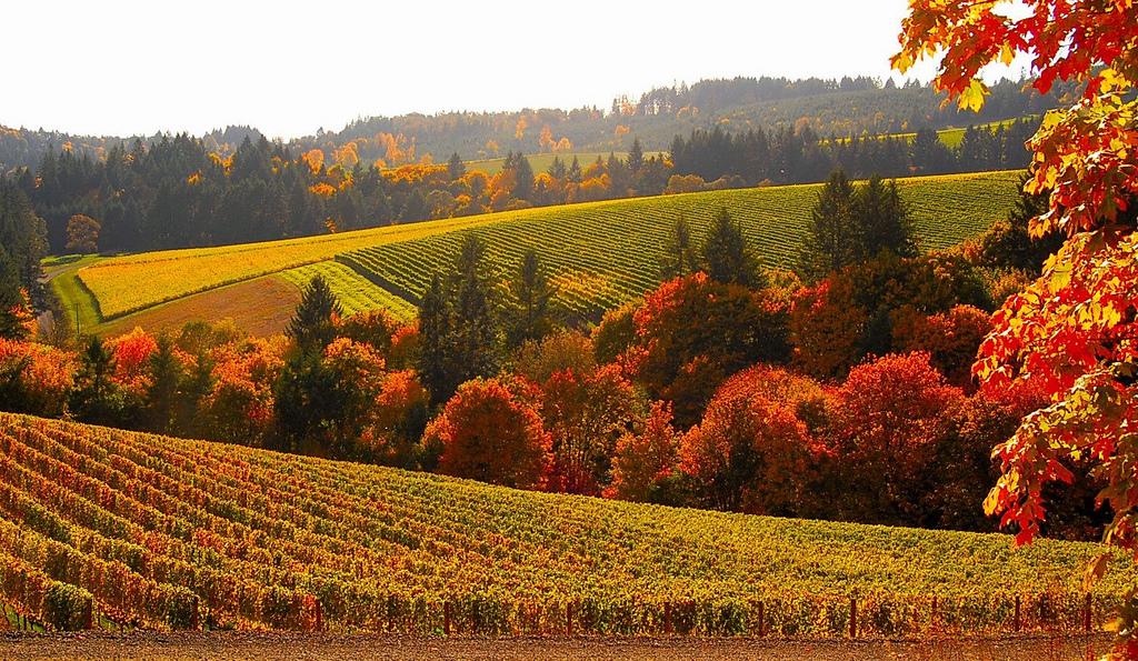 Jesenné spomalenie