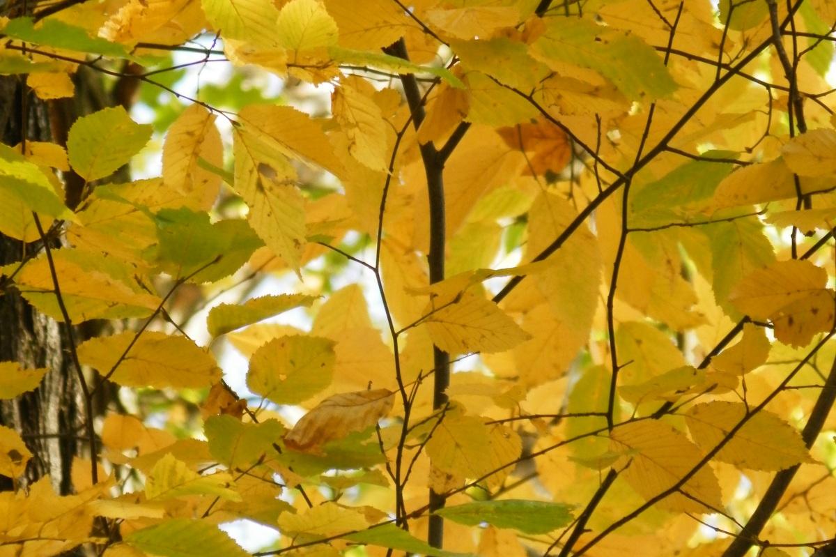 Óda na jeseň