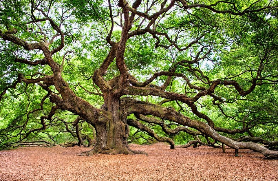O koreňoch života