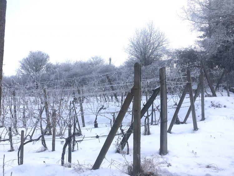 januar vo vinici